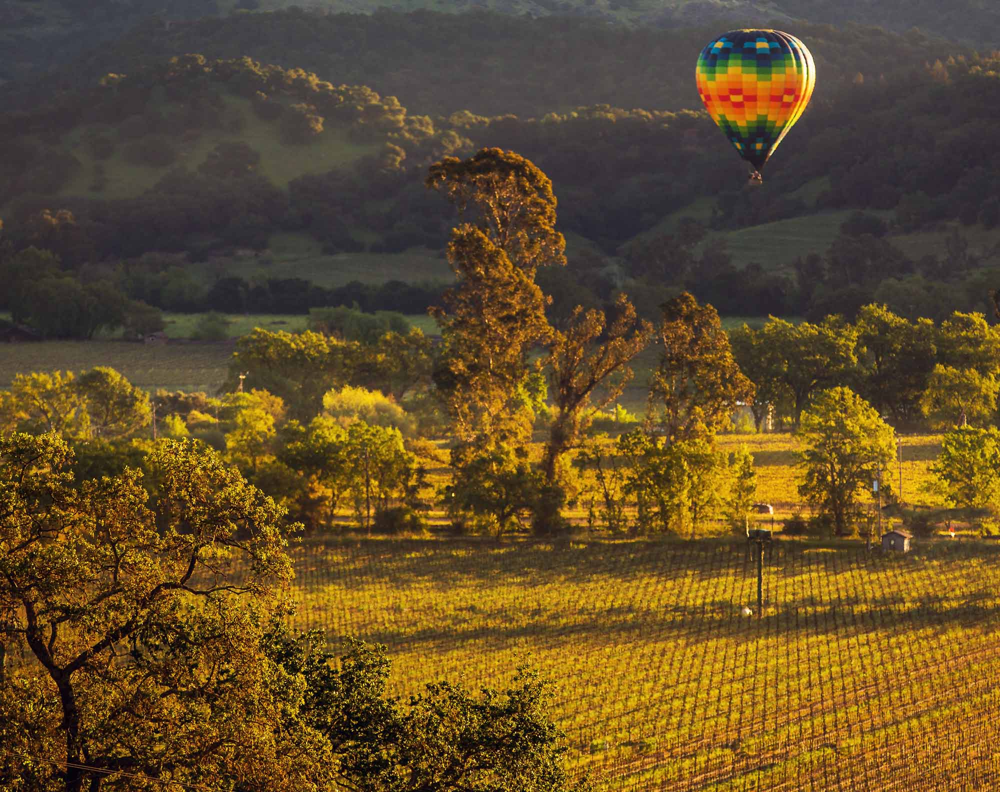 A hot air balloon floating through the valley at Keever Vineyards in Yountville, California